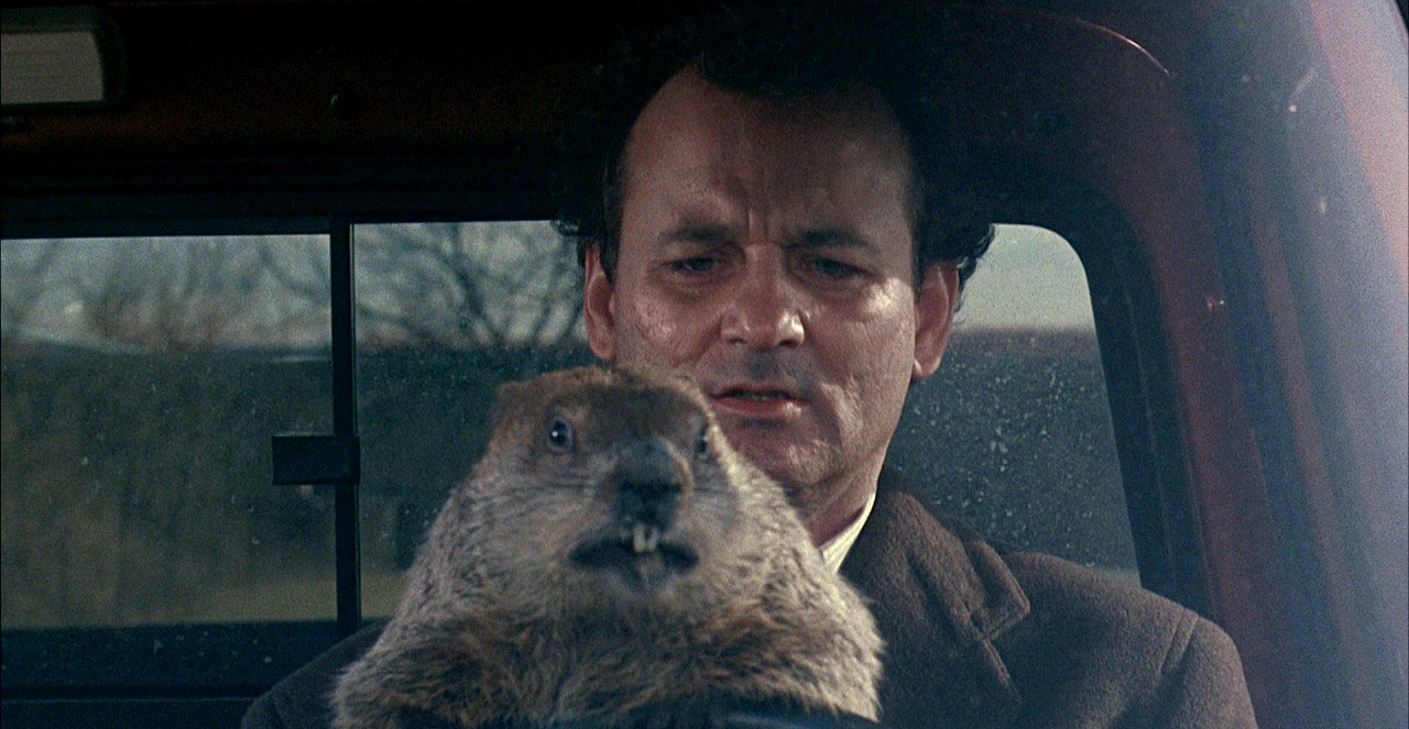 Bill Murray holds a groundhog